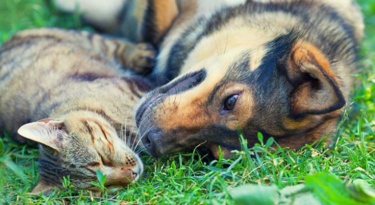 Gatos y perros - Garrapatas - Piensoymascotas.com