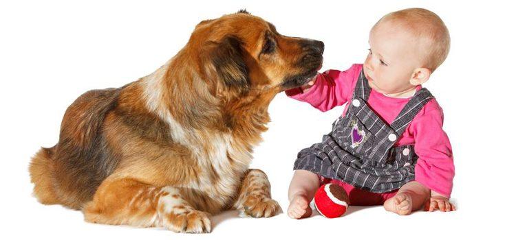 Presentacion perro a bebe
