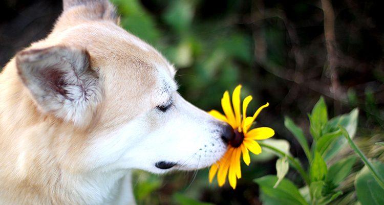 Los perros tienen alergia
